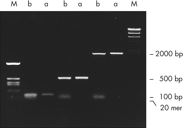 Complete primer removal after PCR.